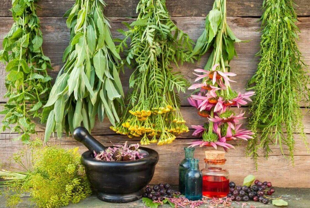 лекарственные растения в составе ополаскивателей при выпадении волос